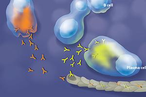Illustrating Cellular Mechanisms